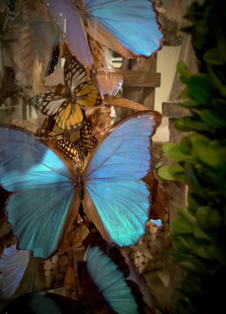 floreal butterflies